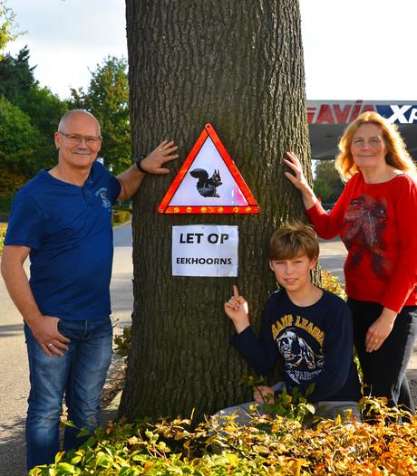 Pas op in Bakel voor overstekende eekhoorns