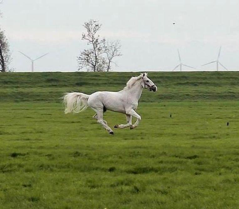 Mentor 'was een heel grappig paard dat zichzelf goed wist te vermaken'. Beeld Arjen de Jong
