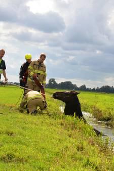 Nijkerkse brandweer heeft tractor nodig om paard te redden
