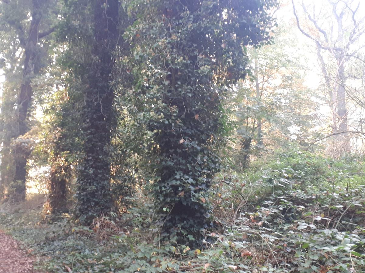 Een deel van het groen en een aantal bomen op landgoed Steenenburg moet wijken, maar per saldo komt er meer groen terug, voor een deel buiten het landgoed, met name in de Hooibroeken.