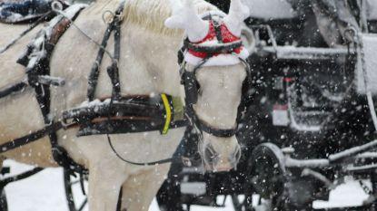 FLASHBACK: 1 jaar geleden kreunde Brugge onder dikke laag sneeuw