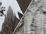 Slechtvalkkoppeltje kiest kerktoren in Breda als thuis: 'Echt geweldig'