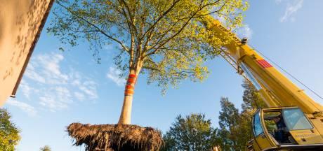Bomen kappen of behouden in Nieuwehaven? Dit compromis stelt Gouda voor