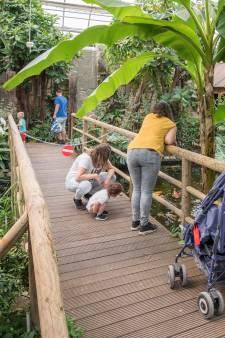 Tropical Zoo trekt  in het 'nieuwe normaal' toch nog 250 bezoekers
