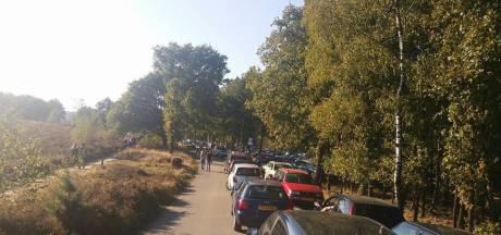 Parkeren in de berm is voortaan verboden in het Nationaal Park Veluwezoom: verkeersveiligheid op drukke dagen een probleem