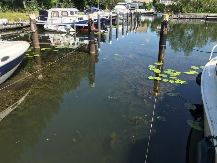 In de Giessen en haven Het Balkengat in Hardinxveld-Giessendam verwijdert Waterschap Rivierenland komende maand de exotische plant 'cabomba' (waterwaaier).