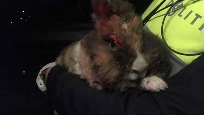 Man (31) uit Apeldoorn opgepakt voor in brand steken konijn: 'Maar Anna is onvervangbaar'