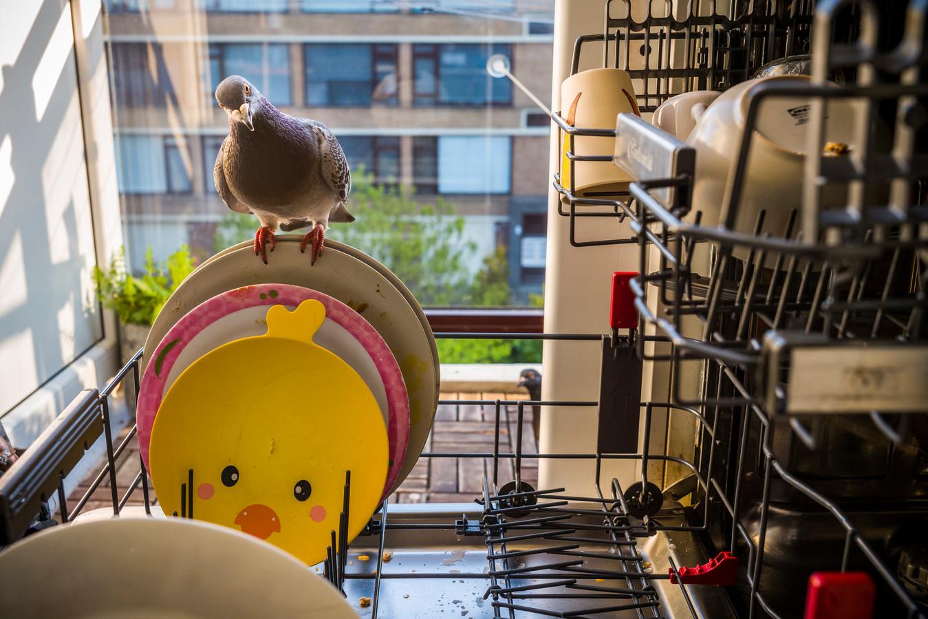 Natuurfotograaf Jasper Doest heeft de World Press Photo gewonnen in de categorie natuur, met zijn serie Pandemic Pigeons.