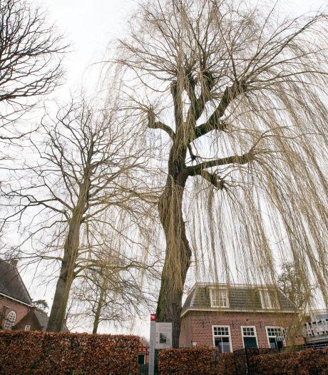 Inspirerende treurwilg in Zundertse Van Goghhoek wordt gekapt