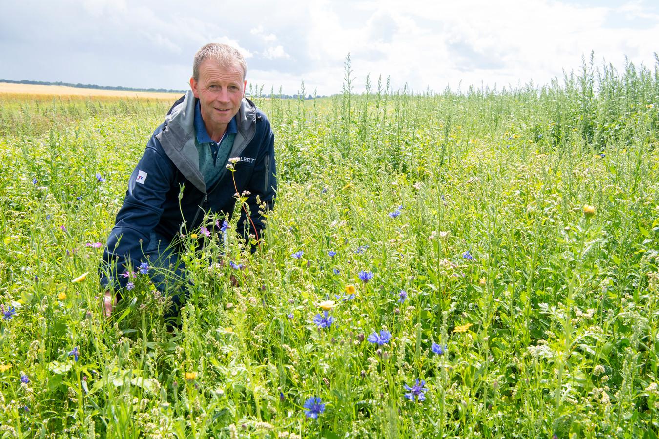 Paul ter Haar is boer, maar helpt ook akkervogels. Delen van zijn perceel zijn met planten en bloemen ingezaaid die aantrekkelijk zijn voor insecten.