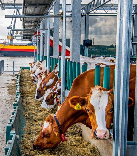 Gemist? Duitsers boycotten drijvende koeienstal en ChristenUnie zonder SGP verkiezingen in
