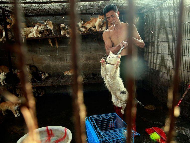 Een slachter in Yulin stopt een kat in een kooi. Een undercover dierenactivist wist het dier te redden.