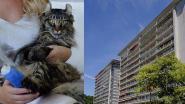 Mirakelkat Marley overleeft val van elf verdiepingen hoog