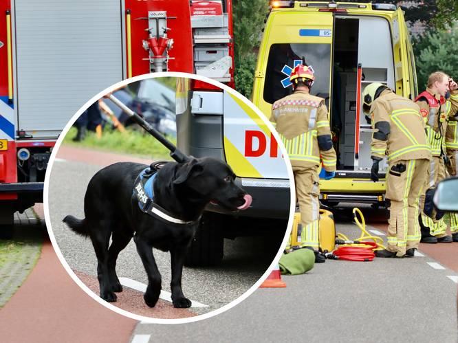 Hond bleef bij bazin in auto na ongeval: 'Hij slaapt nog steeds op de jas van mijn vrouw'