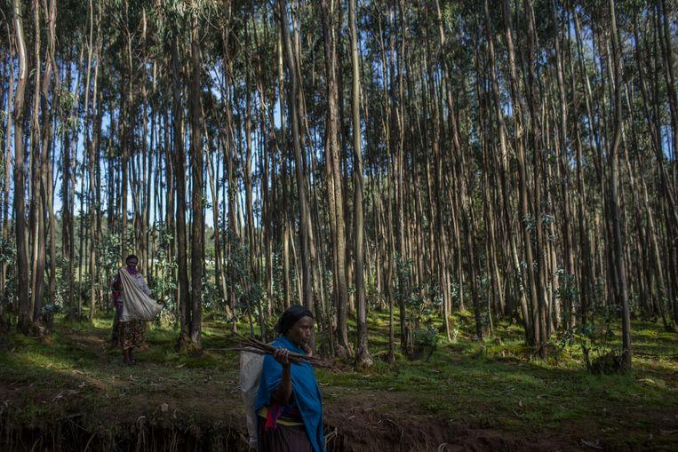 Vrouwen sprokkelen hout in een bos in Ethiopië. Met het financieren van projecten om ontbossing tegen te gaan kunnen landen de uitstoot van broeikasgassen afkopen. Beeld null