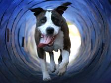 Plan: huisdier in Apeldoorn tijdelijk in opvang als baasje even buiten beeld is
