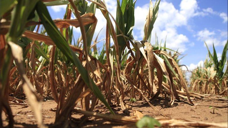 De aanhoudende droogte veroorzaakt ook meer bosbranden. Beeld PHOTO_NEWS
