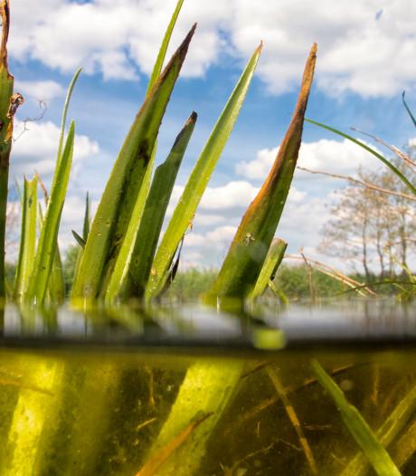 Sneller water voor natuur in Wieden en Weerribben blijkt succes
