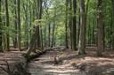 Ter hoogte van de Poolseweg in Hulshorst is de Hierdense Beek verworden tot een droge bedding.