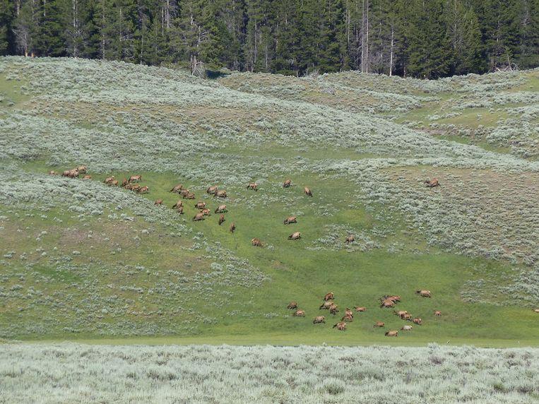 Yellowstone Beeld Guido Nas