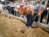 Honderden boeren in Brabant zijn al 1,5 jaar buiten hun schuld illegaal aan het werk
