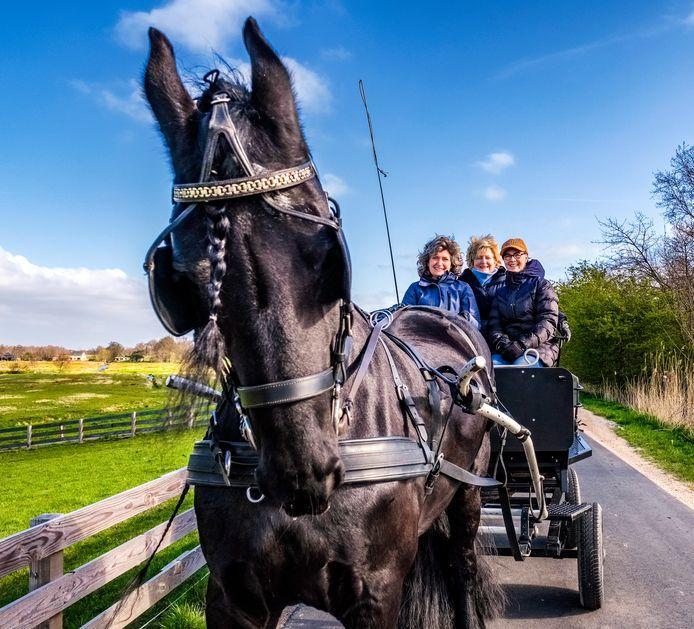 Daniëlle Samsom- van Eijk uit Wilnis en haar vriendinnen Hanny en Miranda rijden iedere zaterdag met de kar door de polder. Voortgetrokken door Friese merrie Jitte.