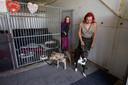 Chelsey van Minderhout (l) en Aris van Eck gaan zoeken nieuwe baasjes voor hun opvanghonden, baasjes die de verantwoordelijkheid voor hun soort honden aankunnen.