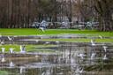Het Zuiderpark staat grotendeels onder water dat trekt veel kokmeeuwen aan.
