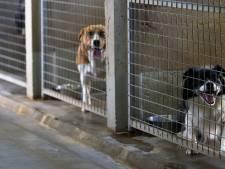 Coronahond met problemen zorgt voor hoofdbrekens bij dierenasiel: 'Waar blijven ze straks?'