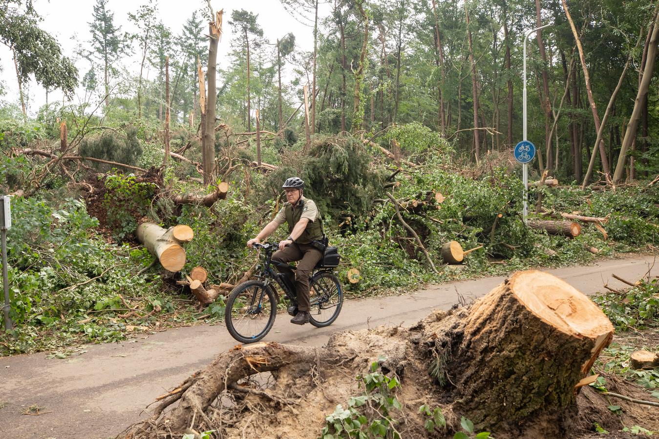 De gemeente is gestopt met het verwijderen van boomstronken in Leersum.