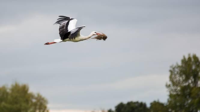 Leer dit weekend in het Zwin alles over de vogeltrek