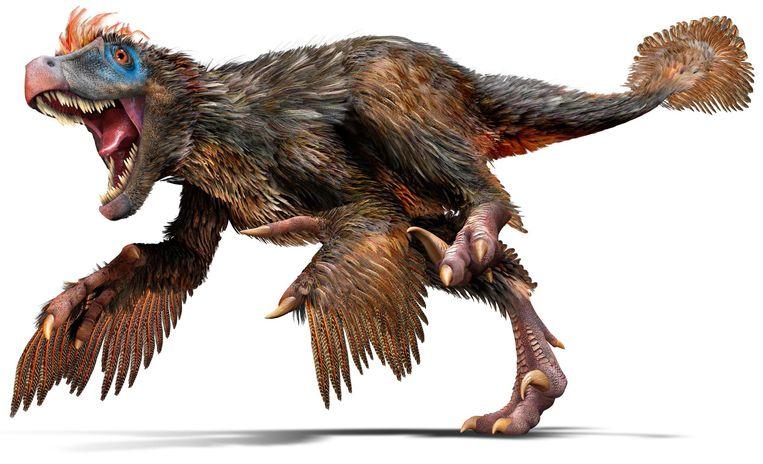 Vliegen kon de velociraptor niet, maar gevleugeld was hij wellicht wel. Hij zag eruit en gedroeg zich ook als een arend. Beeld RV