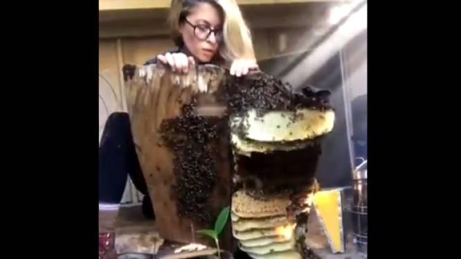 """Texaanse imker verhuist enorme bijenkolonie met blote handen en gaat viraal: """"Gewone dinsdag voor mij"""""""