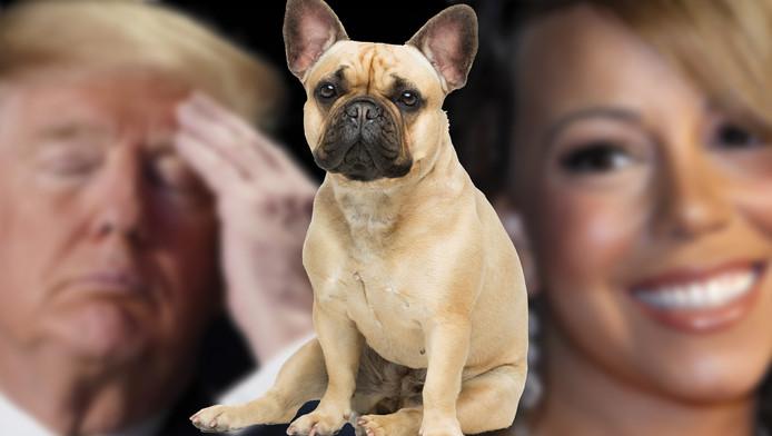 Trump en Mariah Carey zijn allebei geboren in een Jaar van de Hond.