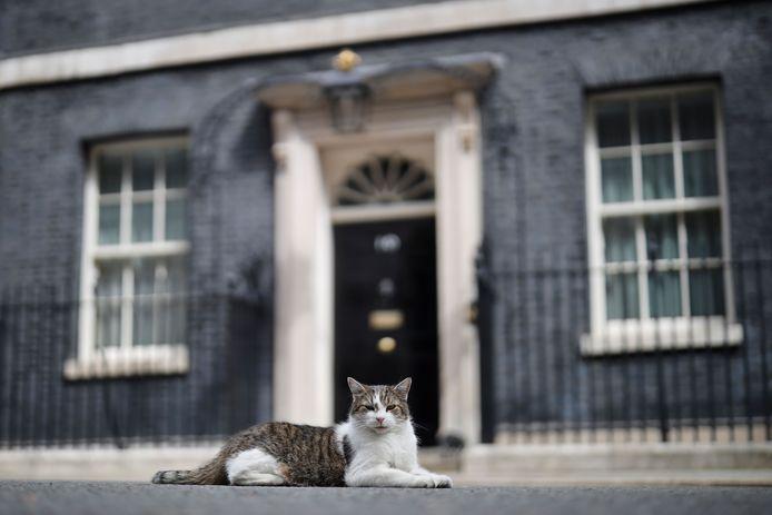 Larry aan Downing Street 10 in Londen, de ambtswoning van de Britse premier.