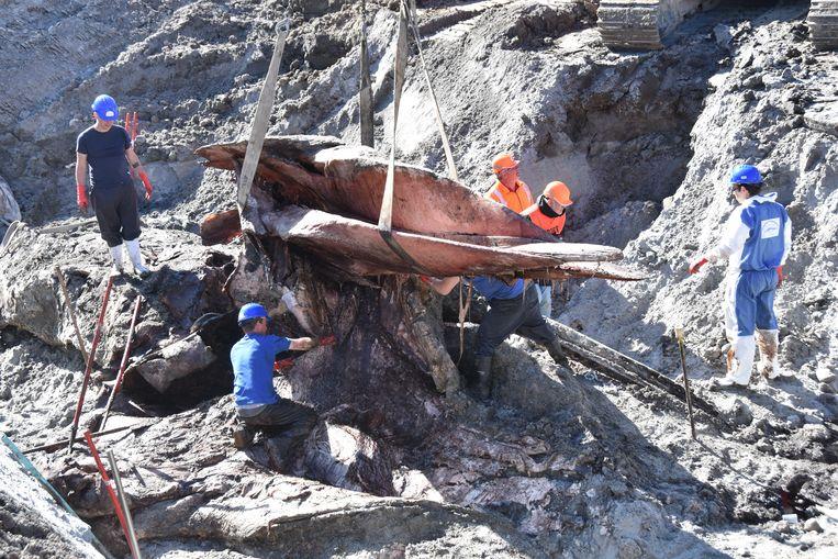 In twee stukken werd het dier van 17 meter lang boven gehaald