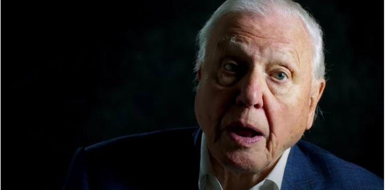 David Attenborough in A Life on Our Planet, nu te zien op Netflix. Over de schoonheid van de planeet, en hoe we haar als mensen vernietigen.  Beeld Netflix