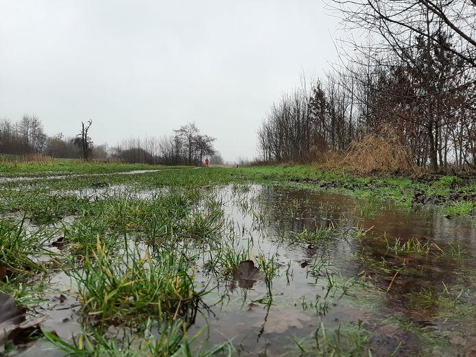 De overvloedige regenval heeft natuurgebied De Groene Grens bij Veenendaal al deels onder water gezet.