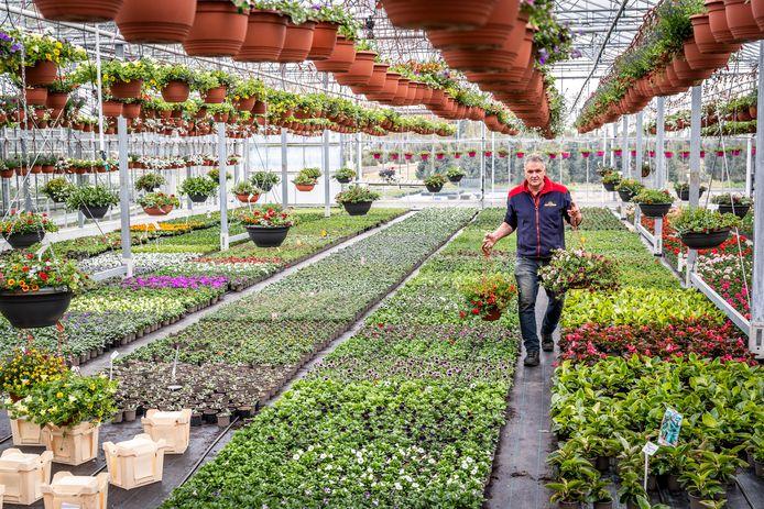 Bloemenkweker Marc Penninx in zijn kas