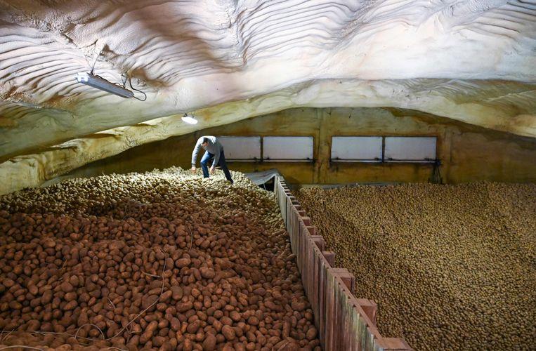 Een Franse aardappelboer met grote overschotten, doordat de export is weggevallen. Beeld AFP