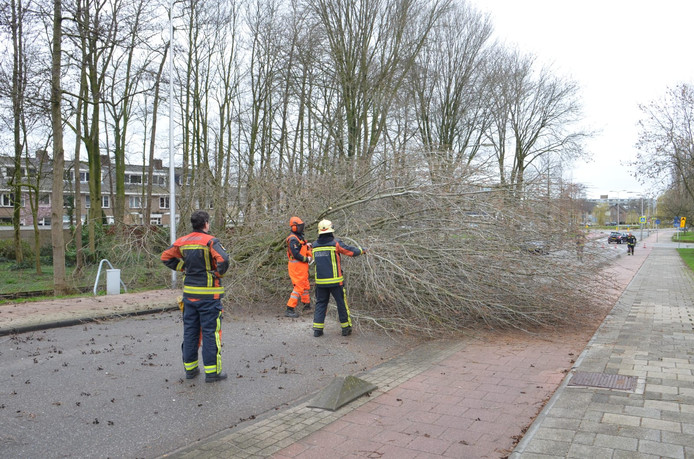 Een grote boom viel op de Staringlaan in Waddinxveen. De brandweer is de boom in kleine stukken aan het zagen, zodat hij kan worden verwijderd.