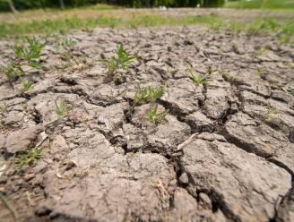 Droogteperiode Hageland in 2020 als ramp erkend