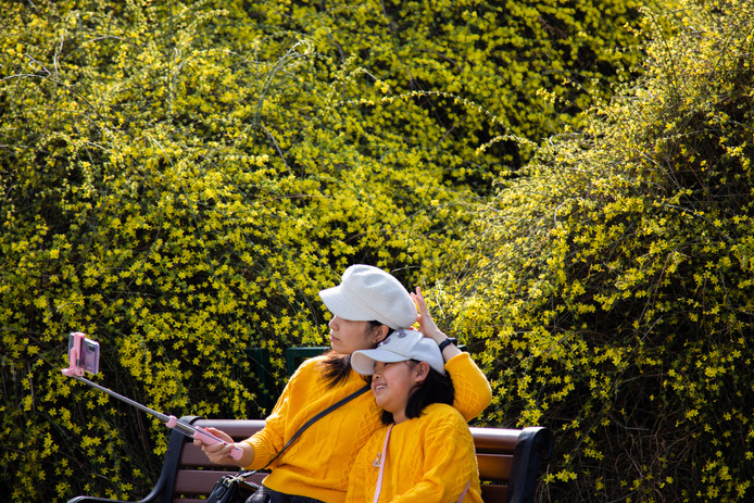 Een moeder en haar dochter genieten in het Taoranting Park in Peking van de gele bloesem. Beetje bij beetje keert het normale leven terug in China.