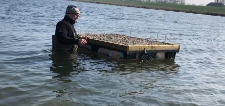 Visdiefje kan nu broeden op eigen vlot in de Maas