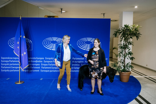 Foto van Er staat een paardje in de gang: blindengeleidepaard Dinky brengt bezoek aan Europees Parlement