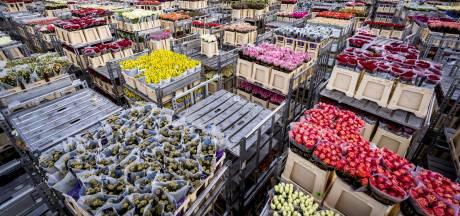 Gek geladen karren en verborgen ruimtes: zo ging een cokebende te werk op de bloemenveiling