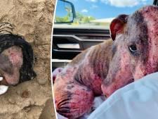 Man begraaft hond levend op strand, beestje net op tijd gered