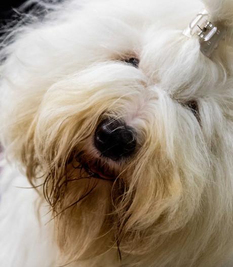 Dordtse Hondenschool Fred Riet houdt er na een kwart eeuw mee op