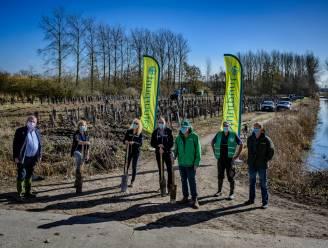 Natuurpunt start met plantactie van 8.000 bomen in Scheldevallei Moerzeke-Kastel
