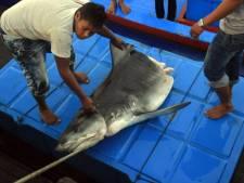 Rhinos, éléphants et requins, héros d'une réunion sur les espèces menacées